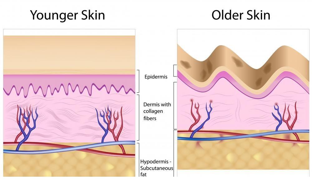 bo-sung-collagen